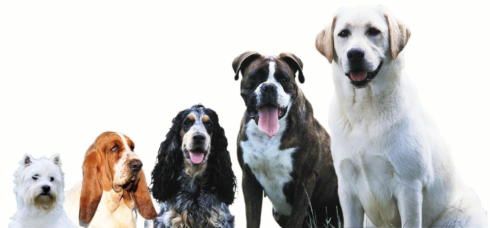 small-dog-training-big-dog-training-puppy-training1
