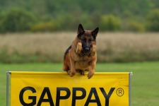 german-shepherd-707034_960_720