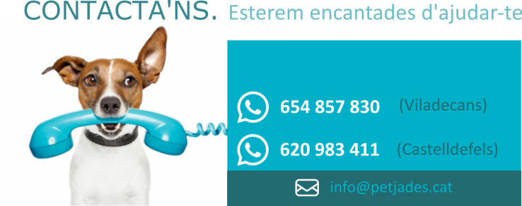 contactans-2 copia