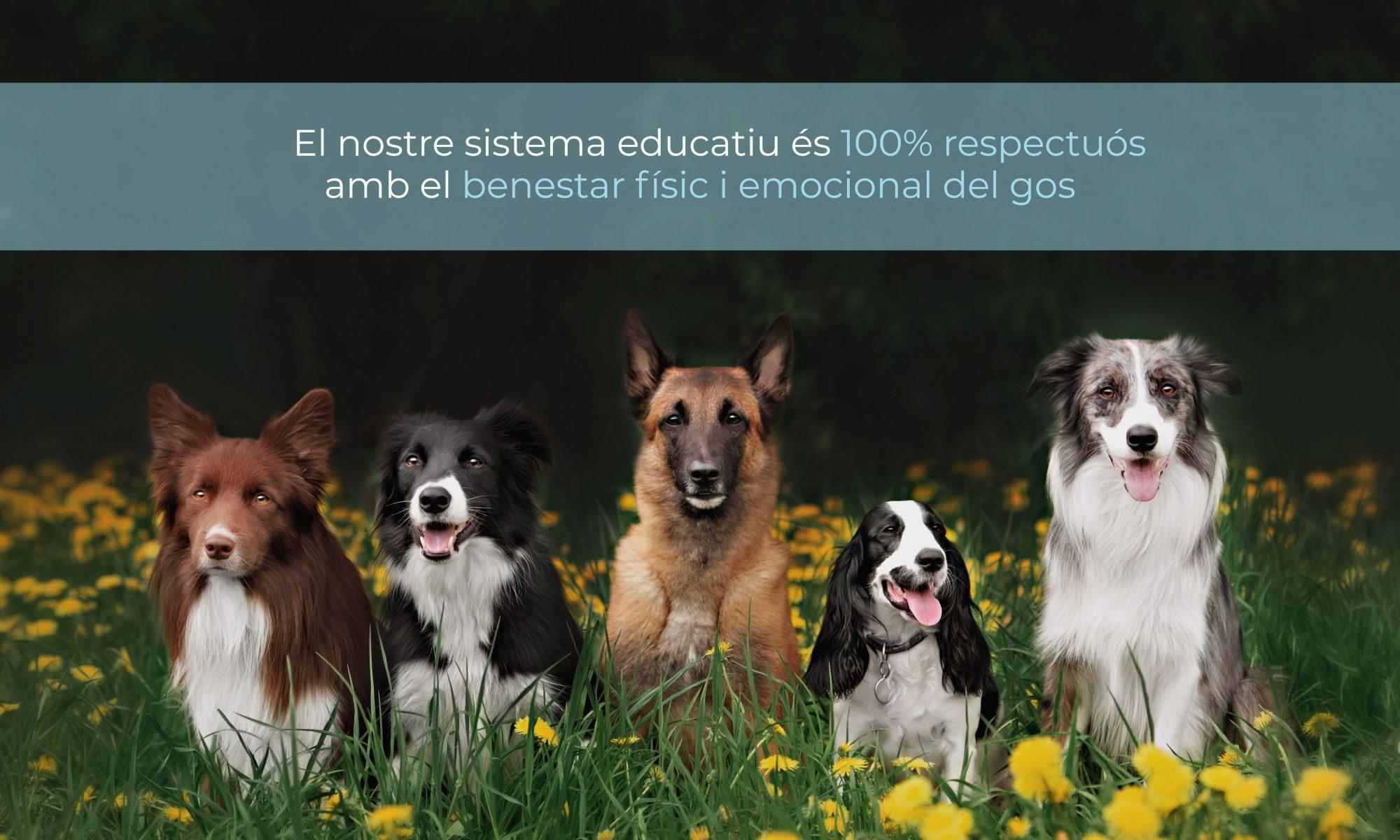 Educació canina i Modificació de conductes.
